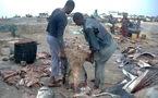 Massacre sauvage des requins-marteaux à Saint-Louis, Ornithondar sonne l'alerte