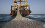 Pêche industrielle : 115 navires dans les eaux sénégalaises