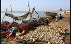 REPORTAGE: Production du poisson fumé à Guet-guet Ndar : La raréfaction de la production de la ressource plombe les actions des femmes