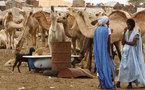 Les rues de Nouakchott, quelques heures après la mort de Khadafi
