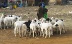 Tabaski au Sénégal: il y aura deux fêtes cette année