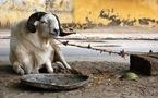 TABASKI : Les moutons sont là, hors de portée !