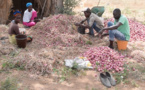 Des producteurs locaux en pleine récolte