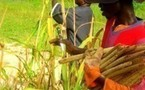 Un Conseiller de la Communauté rurale de Gandon s'insurge contre le Plan Takkal