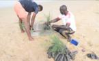 Reboisement : 3.500 plants de filaos mis en terre à l'Aire Marine Protégée de Saint-Louis (vidéo)