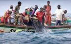 Appel aux candidats à la présidentielle pour une pêche durable