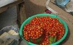 POUR BOOSTER LA PRODUCTION DE RIZ DANS LA VALLEE : Les professionnels copient sur la filière tomate