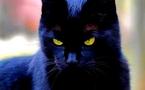 Vidéo| Sorcellerie: Kolda une femme se transforme en chatte noire