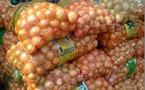 Saint-Louis : l'UNACOIS s'engage à acheter l''oignon de la vallée