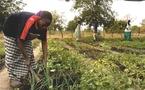 Le gouvernement annonce une subvention de 34,5 milliards FCFA pour la campagne agricole  2011-2012 :
