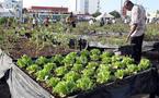 Saint-Louis- Horticolture: La CFAHS s'engage à produire 100.000 tonnes  en 2015