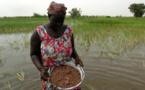 """ACCÈS AU FONCIER RURAL : les femmes du WALO ne veulent plus de """"miettes"""" (vidéo)"""