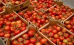 Pour 2011-2012, la filière tomate industrielle a produit un chiffre d'affaires de plus de 3 milliards.