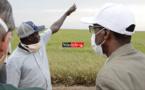 PRESSION AVIAIRE DANS LA VALLÉE : des traitements aériens pour freiner le péril (vidéo)