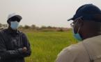 Aboubacry SOW exhorte les producteurs à emblaver plus en hivernage