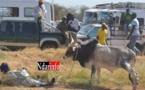 Visite du Premier minitre à Ndioum : Un taureau s'attaque violemment à son berger, en pleine cérémonie. Regardez.