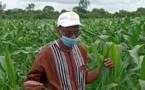 L'agriculture, ''rempart contre les impacts négatifs du COVID-19'' (ministre)