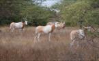 """Saint-Louis : Faire de la réserve de Gueumbeul """"un véritable hub touristique"""" (vidéo)"""