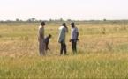 À THIAGO et NDOMBO, le PGIRE booste l'agriculture (vidéo)