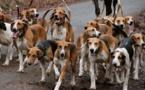 Des chiens errants sèment la terreur dans l'hydrobase de Saint-Louis