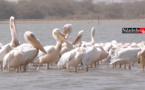 Doune Baba DIEYE : l'autre réserve ornithologique de Saint-Louis (vidéo)