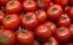 Contreperformance des producteurs de tomate: Un déficit de production de 35.000 tonnes dans la vallée.