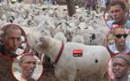 Foirail de Darou : Moutons chers … Pas d'eau, d'éclairage et de toilettes … (vidéo)