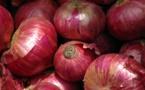 Gabar : les producteurs d'oignon sollicitent l'aide de l'Etat pour écouler leurs productions