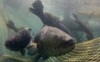 Dossier: les conséquences de la pêche illégale.
