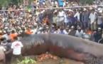 Un monstre géant découvert au Vietnam (vidéo)