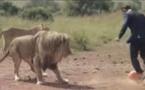 VIDÉO Il joue au foot avec trois lions sauvages en pleine savane