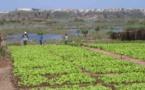 AGRICULTURE:  3000 hectares affectés au PRODAC à Agnam Civol