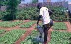 Communauté rurale de Fass-Ngom : Des centaines de jeunes se reconvertissent dans le maraîchage