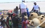 GESTION DE L'AIRE MARINE PROTÉGÉE  DE SAINT-LOUIS: immersion de 400 récifs artificiels (vidéo)