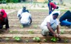URGENT : Lancement du concours d'entrée au centre d'horticulture de Saint-Louis.