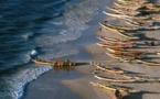 Le manque à gagner de la pêche illégale au Sénégal