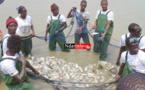 Des carpes de la première pêche de poissons