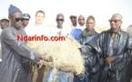 ÉLEVAGE: SENHUILE offre 2000 bottes de paille de riz à Gnith et Ronkh.