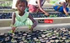 LUTTE CONTRE LA DÉFORESTATION: 5.000 plantes installées dans la pépinière communautaire de GANDIOL.