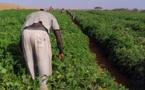 Campagne hivernale de production agricole 2015/2016 dans la vallée : Les opérations de semis et de repiquage ont démarré