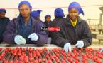 Des femmes de YAMANE trient le radis. Crédit Photo: NdarInfo