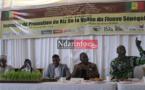 2e édition des journées de promotion du riz de la vallée : Ross-Béthio, zone de convergence agricole, ce jeudi.