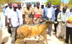 JOURNÉE DE L'ENVIRONNEMENT : synergie contre le commerce illicite d'espèces sauvages.