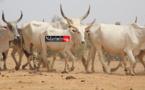 Eco-villages : le DG de l'ANEV dresse le portrait du modèle sénégalais