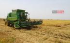 Riziculture : 10 milliards de FCfa de la Bad à la Compagnie agricole de Saint-Louis
