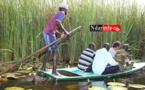 ENVIRONNEMENT: l'ACTS repousse le typha | Vidéo |