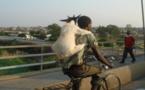 Saint-Louis : le blogueur « emprisonne » un voleur de chèvre, gardien de la Linguère.