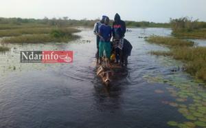 SALGUIR DIAGNE : pour traverser le fleuve, les populations montent sur des charrettes (photos)
