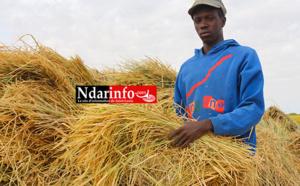 L'autosuffisance en riz pourrait diminuer de 5 % la balance commerciale (officiel)