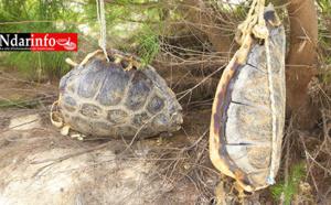HYDROBASE : les rejets plastiques des visiteurs tuent deux tortues (photos)